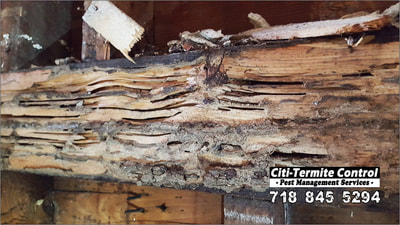 Termite damage in a home.